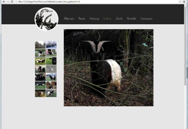 Webseite Galerie, Webdesign, Züchter, Ziegen,